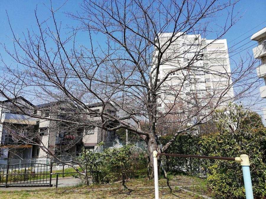 南三堤公園 桜