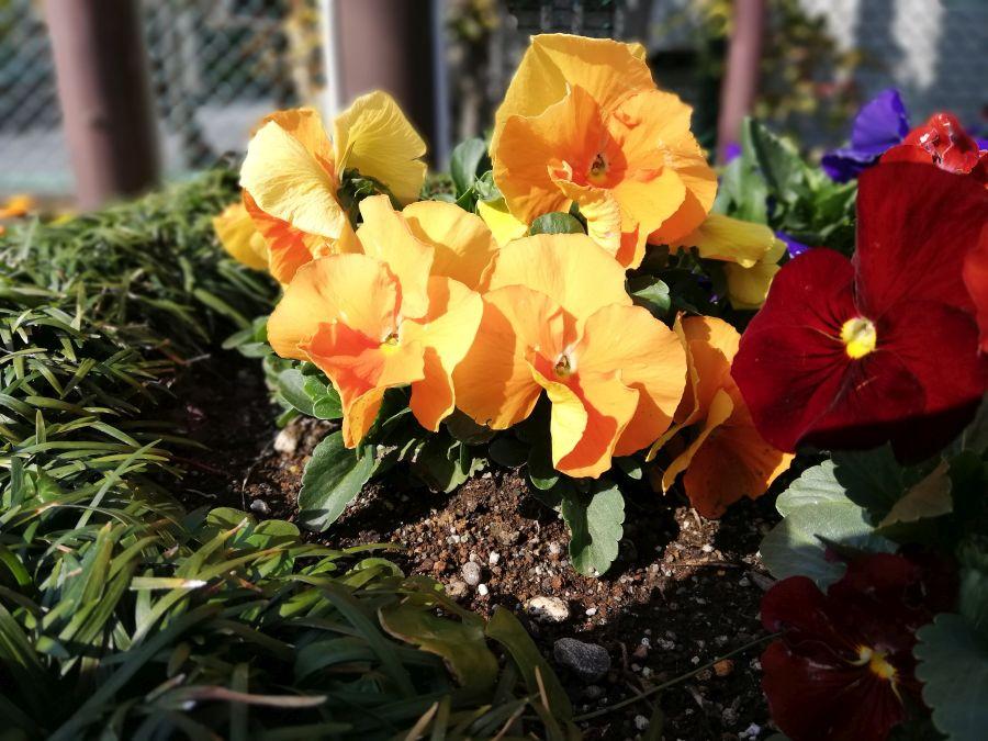 南二和児童公園 お花