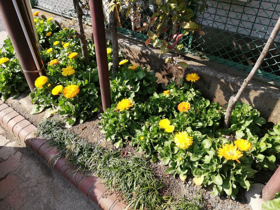 南二和児童公園 花壇