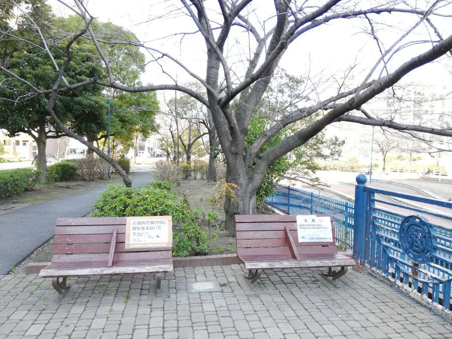 南六郷緑地 ベンチと桜