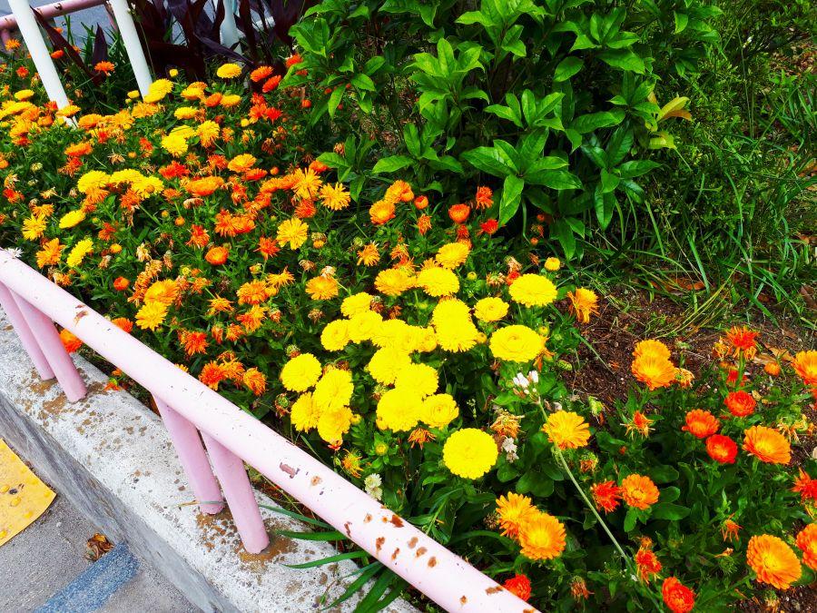 大田区 東糀谷一丁目児童公園 植物