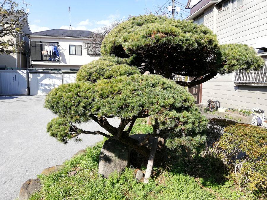 大田区 羽田西児童公園 植物
