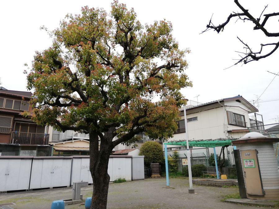 羽田三丁目第一児童公園 木