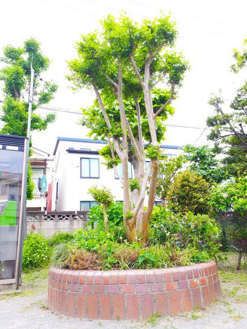 大田区 旭児童公園 花壇