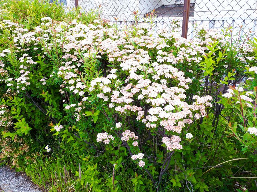 大田区 海老取川公園 植物