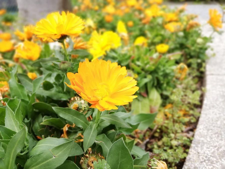 羽田三丁目第二児童公園 お花