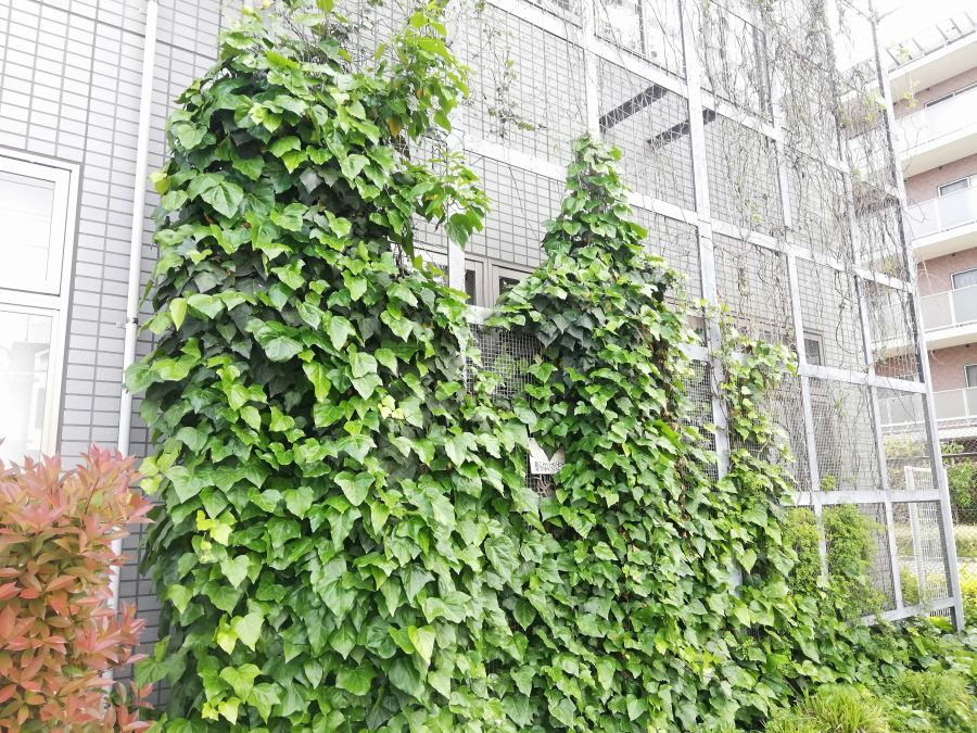 大田区 西三うぐいす児童公園 緑のカーテン