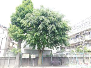 大田区 西仲児童遊園 木