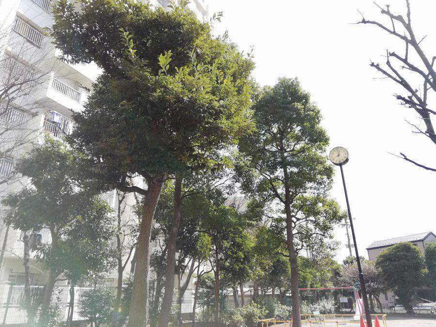 八幡塚公園 木