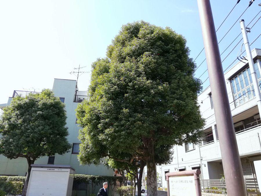 本羽田本町公園 木