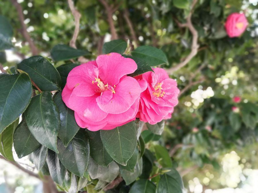 八幡塚公園 お花