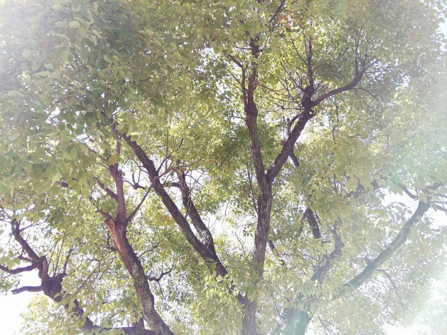 本羽田一丁目公園 木