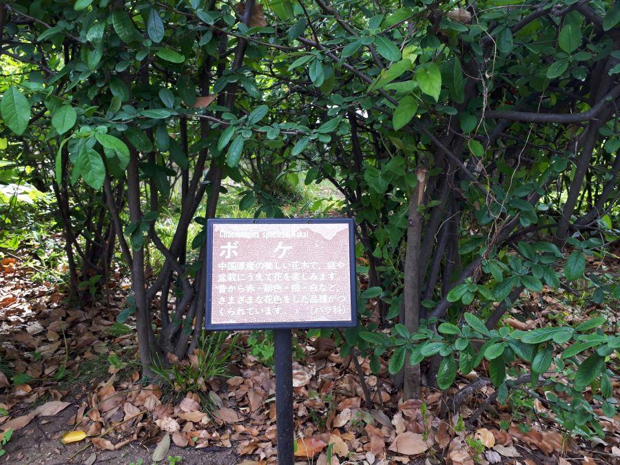 大田区 東糀谷五丁目公園 植物