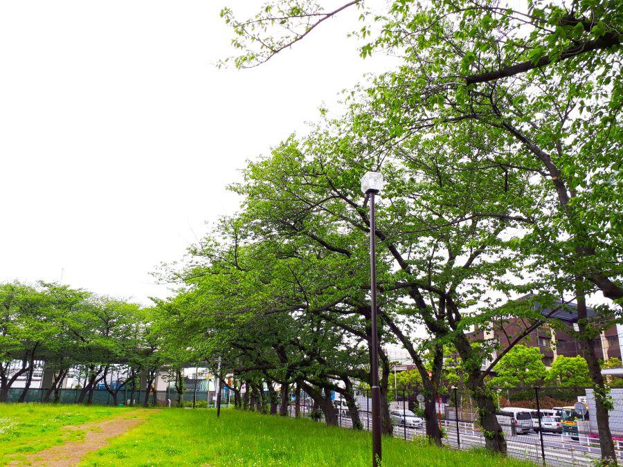 大田区 東糀谷第一公園 広場