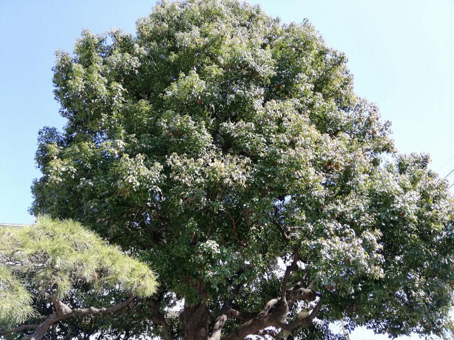 本羽田第三公園 木