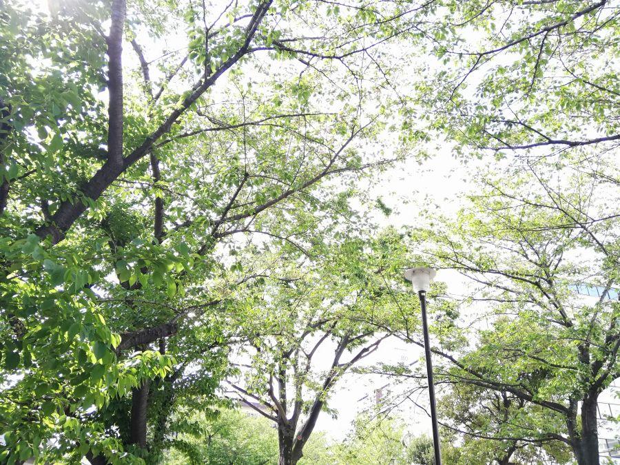 羽田一丁目児童公園 木