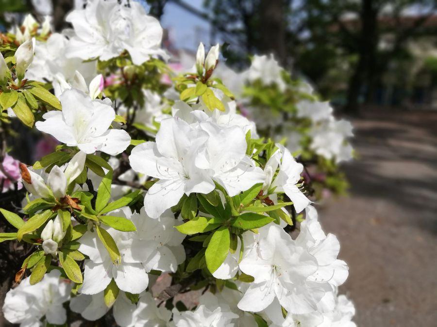 羽田一丁目児童公園 お花