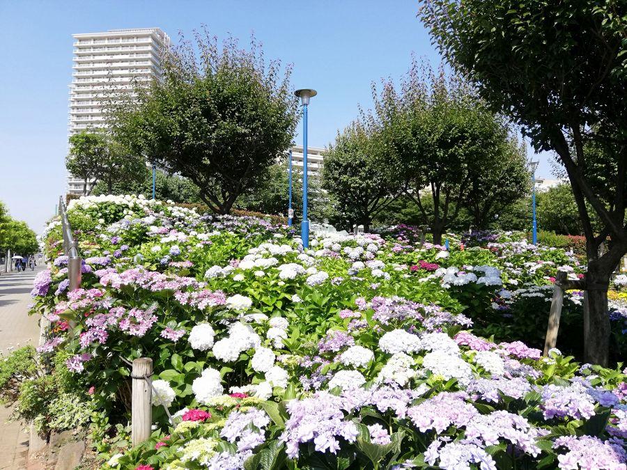 大田区 下丸子公園