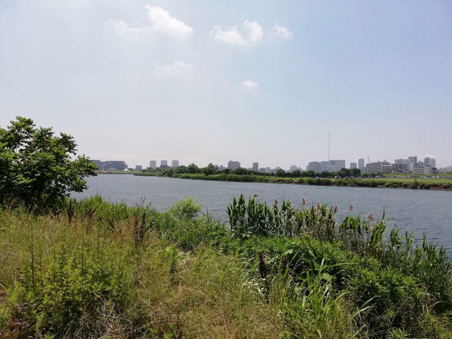多摩川 多摩川河川敷ブタ公園