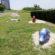 多摩川河川敷ブタ公園【ブタの親子とシュールな顔の仲間たち♪】多摩川2丁目(矢口渡駅周辺)